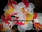 ดอกคัทลียาสีแดงเหลืิอง+ขาว