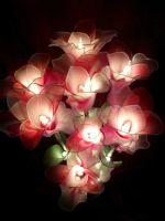 ดอกคัทลียา ชมพูขาว