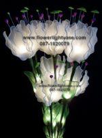 โคมดอกดาวดึงส์ สีขาว