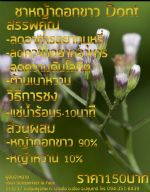 ชาหญ้าดอกขาว Dont