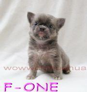 F - One