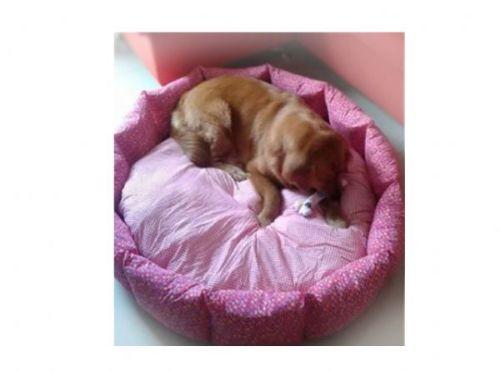 ที่นอนหมาใหญ่